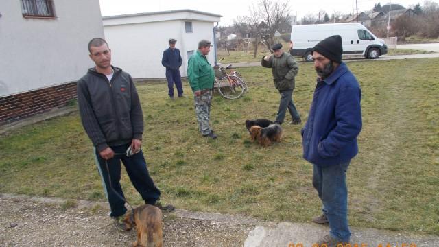Kutyák ivartalanítása 1