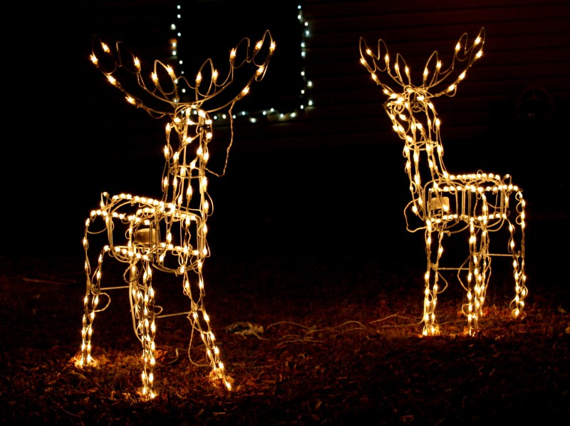 reindeer_holiday_lights