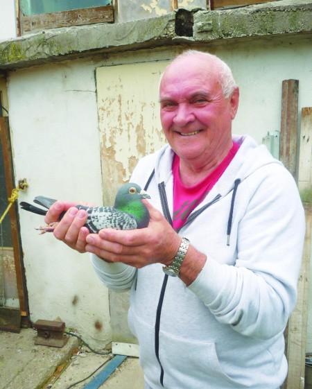 Nochta Štefan postagalambtenyésztő leghíresebb galambjával, Tornádóval.
