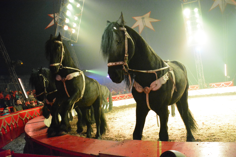 Cirkusz-1