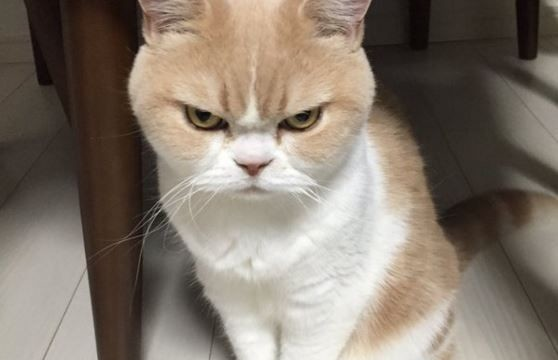 angry-but-still-kinda-cute-10-pictures-9