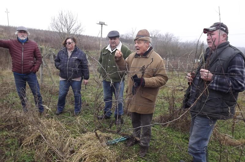 Ágaskordon szőlőtermesztés 1